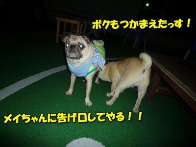 image7_20120614103108.jpg