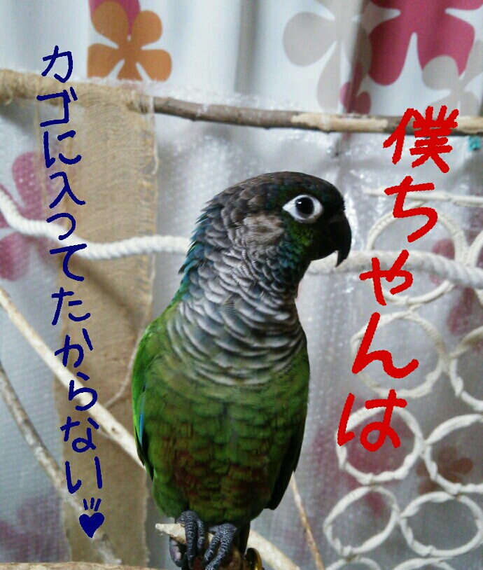 fc2_2014-01-23_19-57-08-480.jpg
