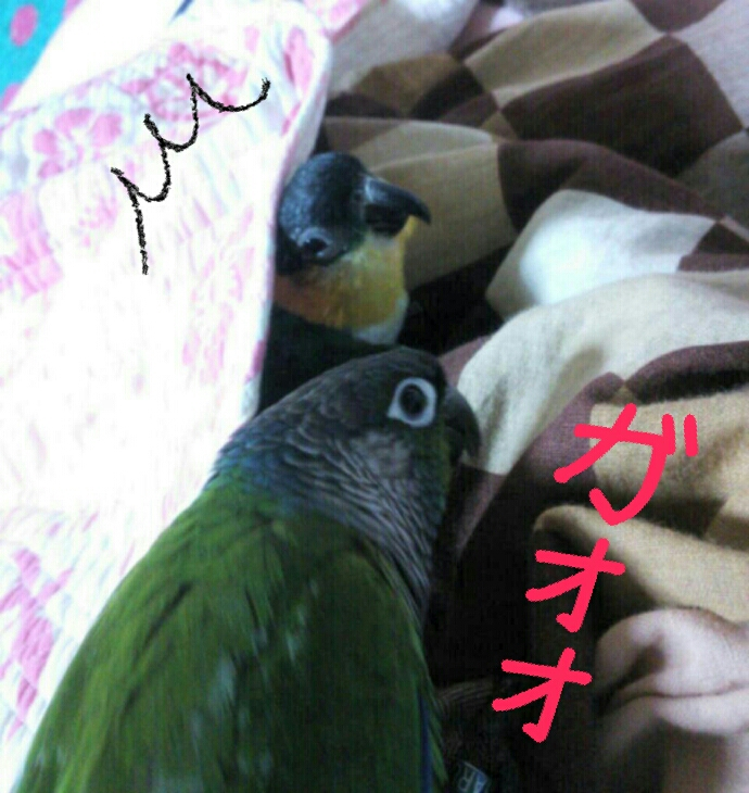 fc2_2014-01-24_21-33-22-431.jpg