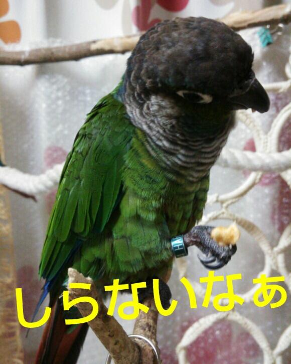 fc2_2014-01-27_20-59-36-838.jpg