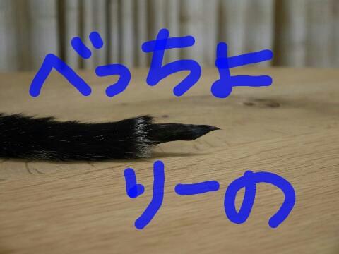 IMG_20121003_152821.jpg