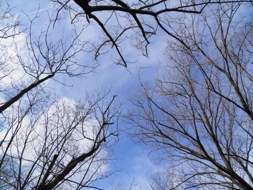 20121229冬公園