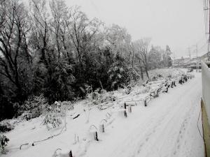 初雪2013その2