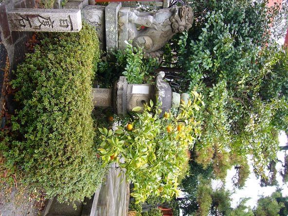 2014若草山山焼き。 花橘