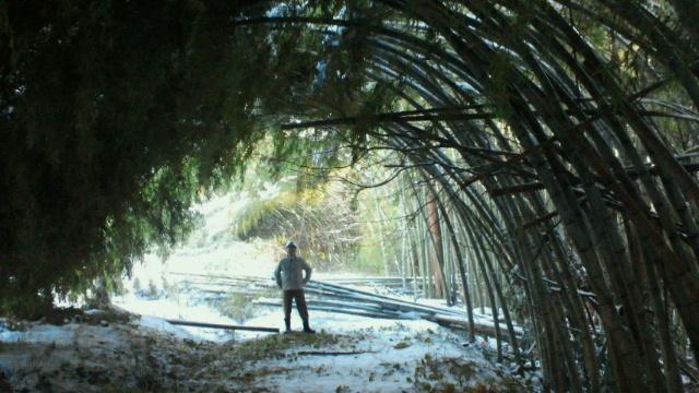 竹トンネル