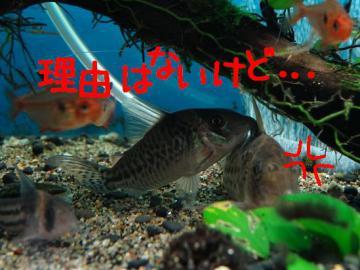 DSC01589-sA.jpg