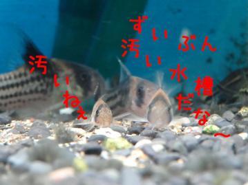 DSC01598-sa.jpg