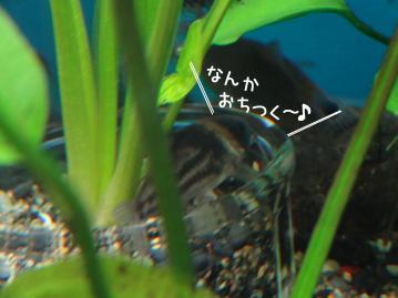 DSC01692-sQ.jpg