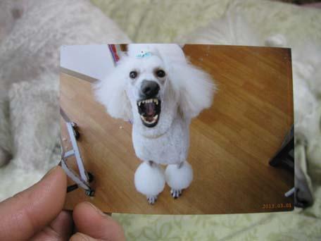 ネオの写真