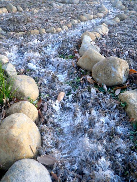 霜柱と言う草3
