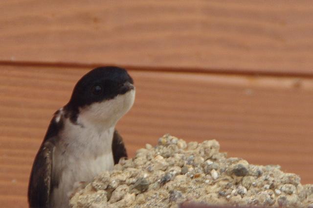 軒下のペンギン?