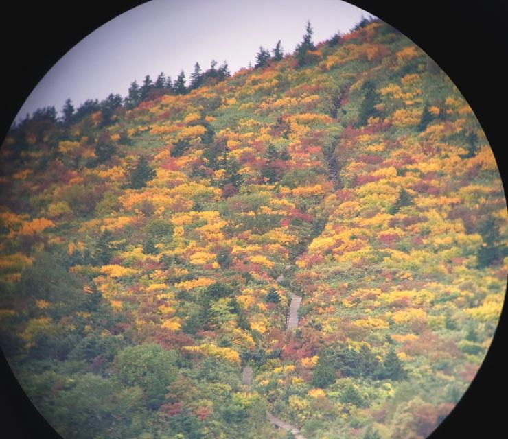 コイン式双眼鏡で見る蓬莱山