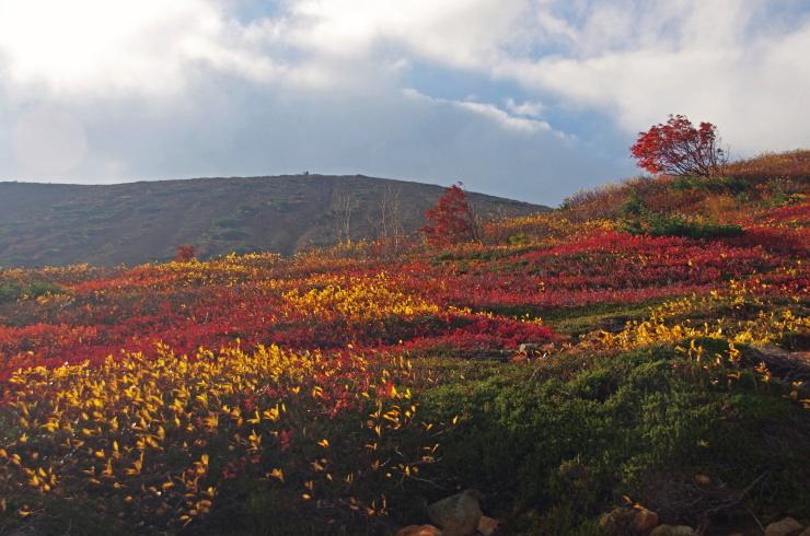 朝の紅葉斜面