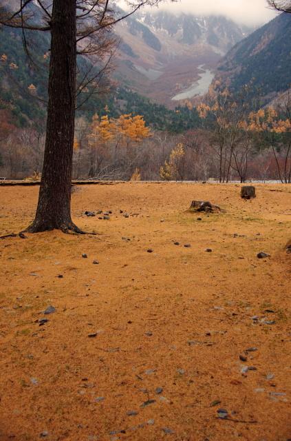 落葉松の絨毯