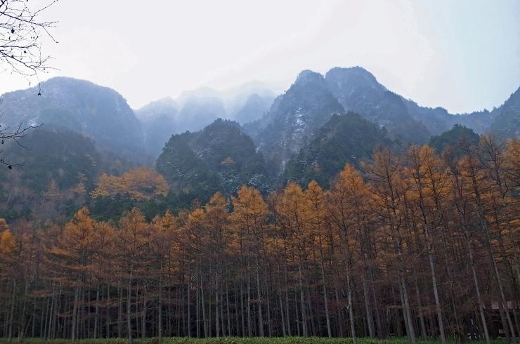 六百山とカラマツ林