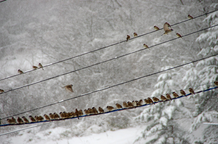 すずめの学校 -冬-
