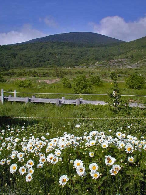 2000.07.17 夏の浄土平湿原にて・・・