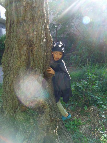 hikari_20141030011950f66.jpg