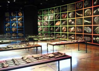 東大古生物学展3R