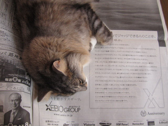 新聞好き猫1