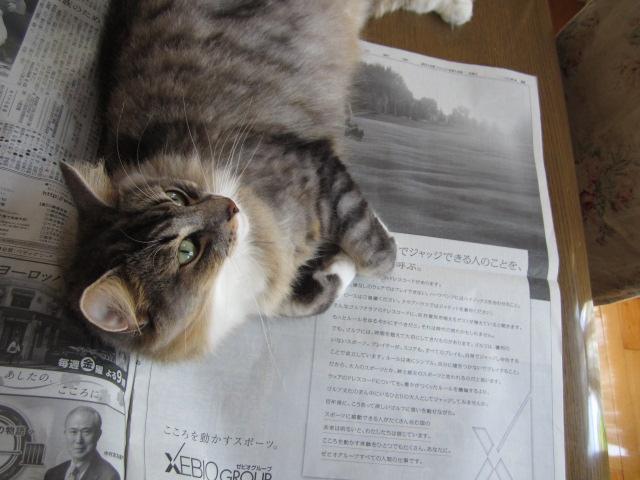 新聞好き猫2