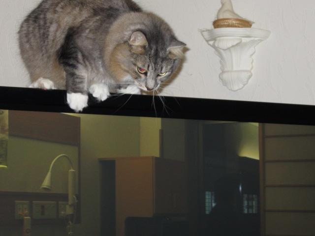 猫 on TV