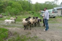 羊たちと_small