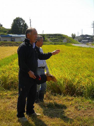 s-稲刈り1