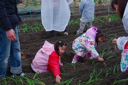 s-農業体験9
