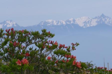 山ツツジと北アルプス
