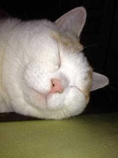 あずき寝顔