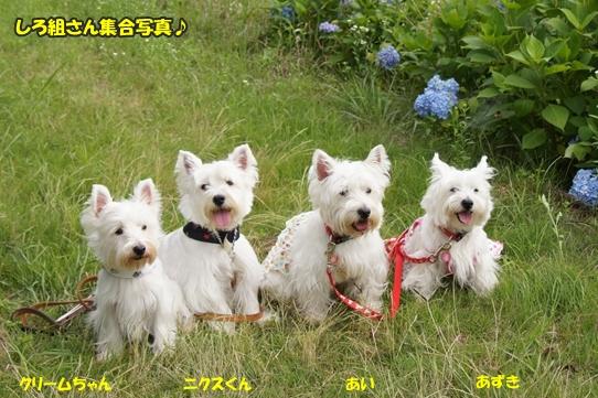 dogshow19