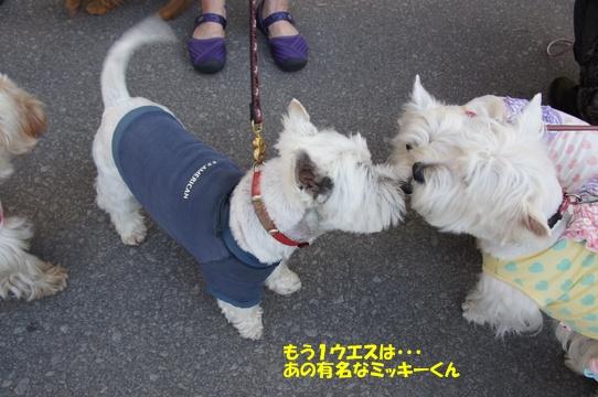 karuizawa24