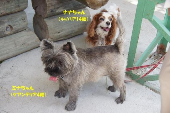 uenohara3
