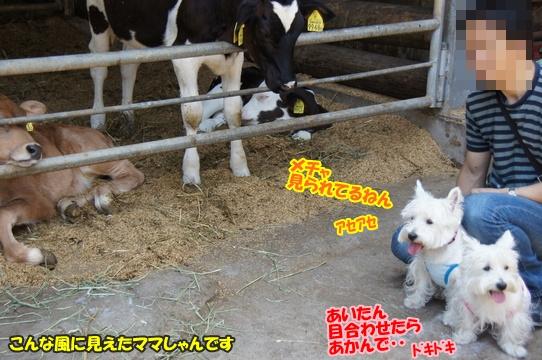 uenohara14