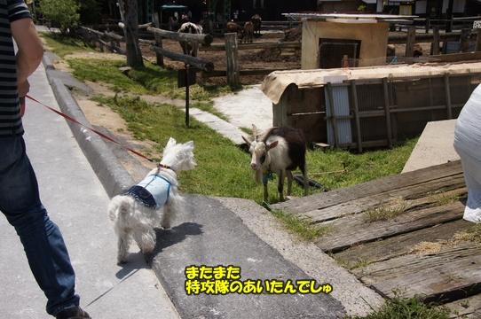 uenohara15