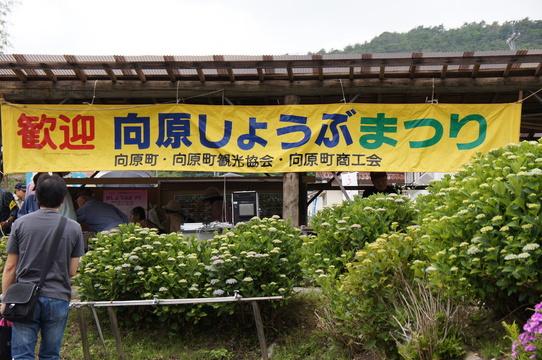 syoubu
