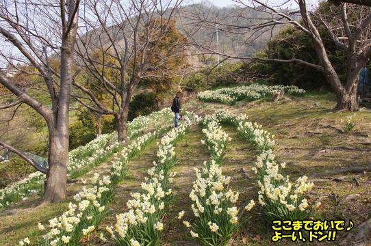 tobishima9