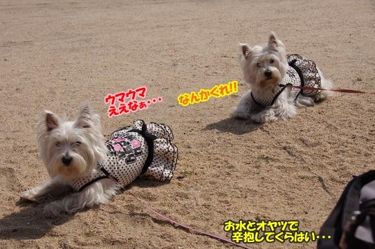 tobishima8