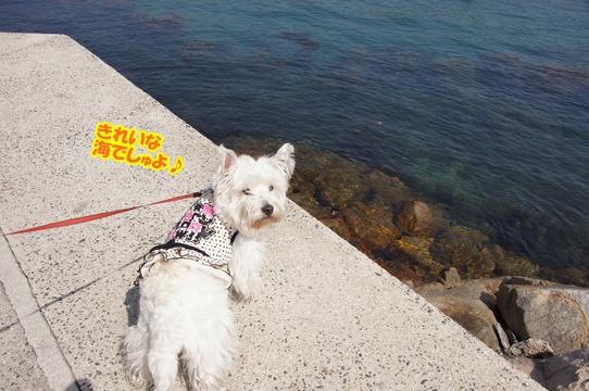 tobishima13
