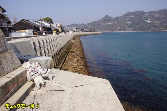 tobishima12