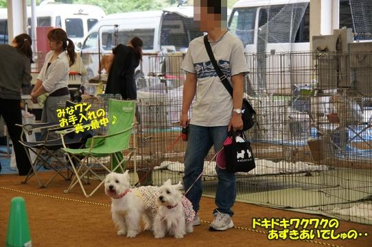 dogshow3