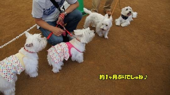 dogshow6