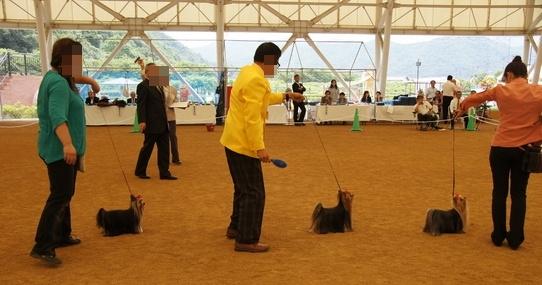 dogshow13