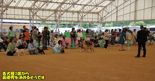 dogshow15