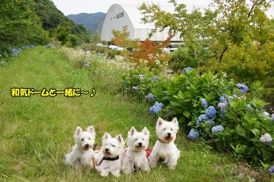 dogshow20