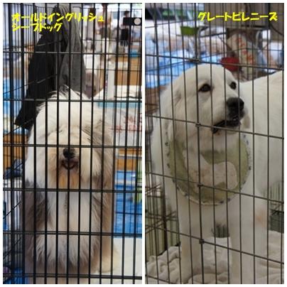 dogshow18
