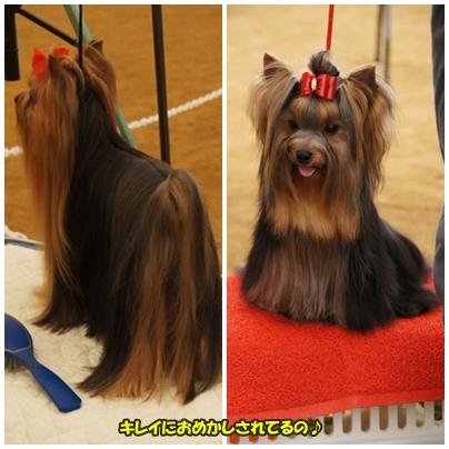 dogshow12