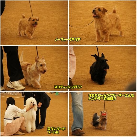 dogshow14