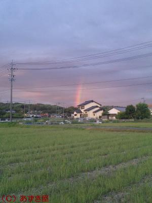 azuki1148.jpg